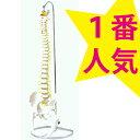 可動型脊柱模型 大腿骨付きモデル IK41 【送料無料】