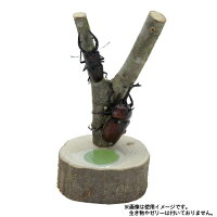 昆虫ツリー T06 SANKO(三晃/サンコー)