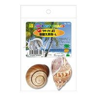 オカヤドカリの宿替貝殻 L 583 SANKO(三晃/サンコー)