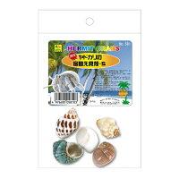 オカヤドカリの宿替貝殻 S 581 SANKO(三晃/サンコー)