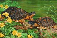 Wood Turtles モリイシガメ 版画 ECOユニバース(エコユニバース)