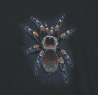 Tarantula タランチュラ Tシャツ ECOユニバース(エコユニバース)
