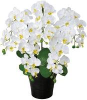 光触媒造花アレンジ 光の楽園 クイーン胡蝶蘭W 3A0907-150