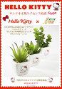 光触媒観葉植物 光の楽園 ハローキティ 多肉植物3点セット 2KT001-40