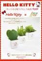 光触媒観葉植物 光の楽園 ハローキティプチハート 多肉植物3点セット 2KT002-40