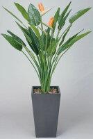 光触媒観葉植物 光の楽園 アートストレチア花付1.6 3A3201-700
