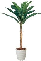 光触媒観葉植物 光の楽園 バナナ2.0 3A3702-450