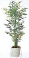 光触媒観葉植物 光の楽園 トロピカルアレカパーム1.8 3A3803-380