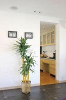 光触媒観葉植物 光の楽園 幸福の木1.6 3A3905-280