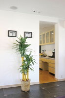 光触媒観葉植物 光の楽園 幸福の木1.8 3A3906-350