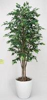 光触媒観葉植物 光の楽園 ロイヤルベンジャミン1.8 3A3908-480