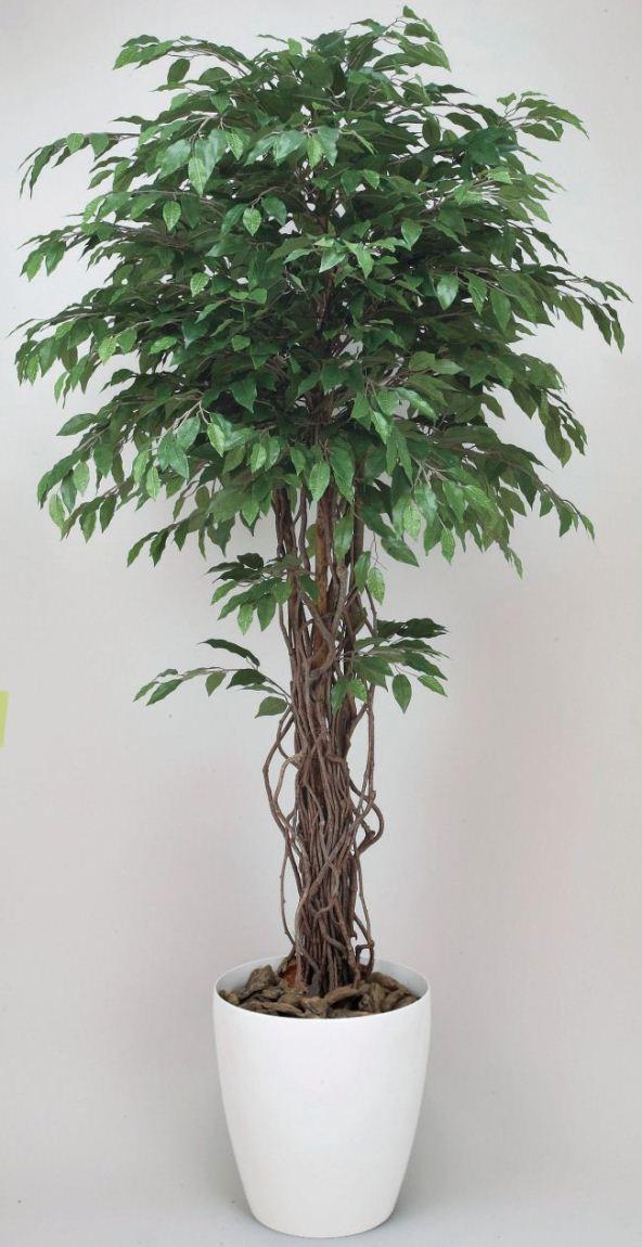 光触媒観葉植物 光の楽園 ベンジャミンリアナ1.8 3A4002-450 - ウインドウを閉じる