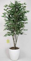 光触媒観葉植物 光の楽園 ベンジャミンツリー1.8 3A4007-400