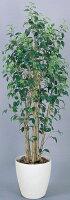 光触媒観葉植物 光の楽園 ワイルドベンジャミン1.9 3A4101-400