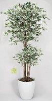 光触媒観葉植物 光の楽園 トロピカルベンジャミン斑入り1.6 3A4109-350