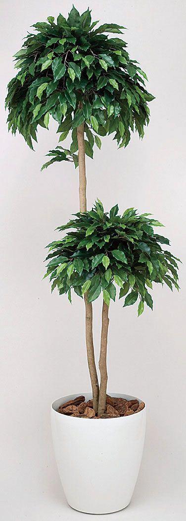 光触媒観葉植物 光の楽園 ベンジャミンダブル1.6 3A4201-280 - ウインドウを閉じる