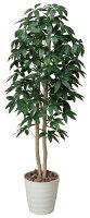 光触媒観葉植物 光の楽園 パキラツリー1.6 3A4203-300