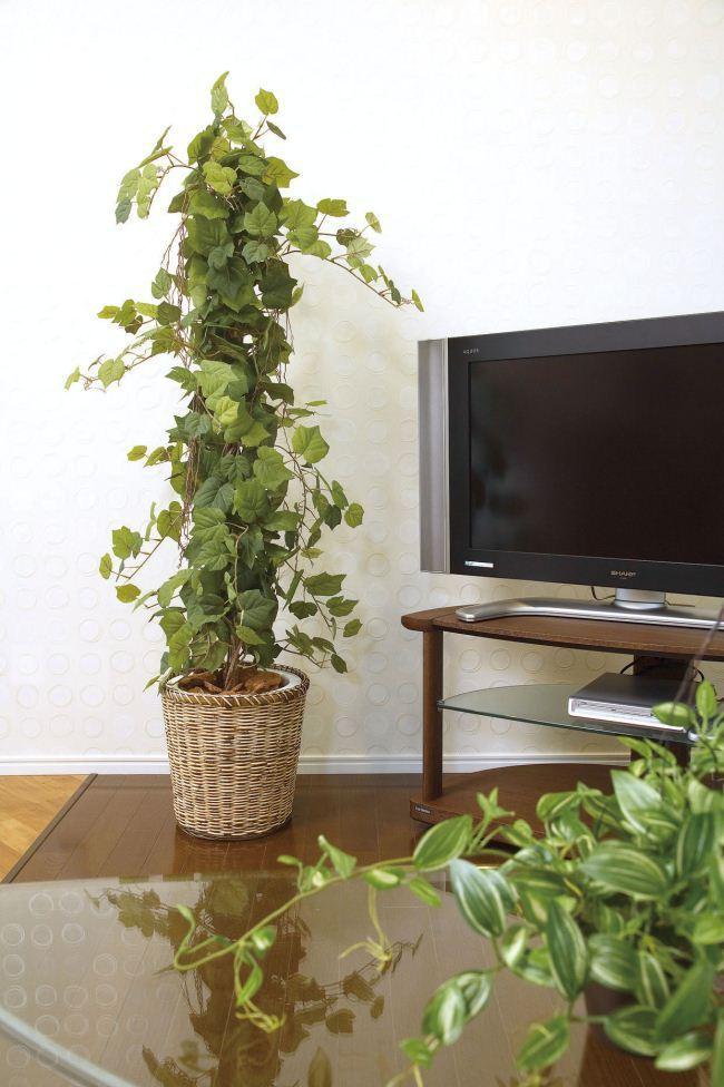 光触媒観葉植物 光の楽園 グレープツリー1.5 3A4211-300 - ウインドウを閉じる