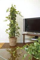 光触媒観葉植物 光の楽園 グレープツリー1.5 3A4211-300