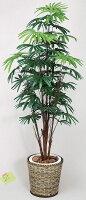 光触媒観葉植物 光の楽園 シュロチク1.6 3A4308-270