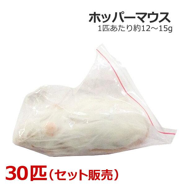 冷凍 ホッパーマウス 30匹