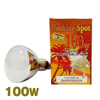 ビバリウム バスキングスポット 100W ポゴナ・クラブ