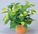 光触媒の人工観葉植物!【送料無料】C4509-40(A5110-40)ライムポトス(鉢付き)