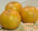 ショッピングこたつ テーブル 【送料無料】佐賀県産 JAからつ せとか【 5kg 】【 佐賀県 JA からつ せとか みかん 家庭用 贈り物 贈答 お祝い お返し こたつ 柑橘 みかん オレンジ フルーツ お取り寄せ うまい 果物】