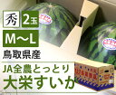 【国産】鳥取県産 大栄すいか【M〜L】【鳥取県産 JA全農とっとり 大玉 スイカ すいか 家庭用 贈り物 贈答 お祝い お中元 お返し 西瓜 大きい 秀 】