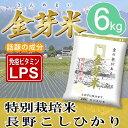 【29年産】金芽米 特別栽培米6kg【2kg×3袋・送料込】※無洗米・LPS(リポポリサッカライド)