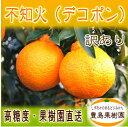 【送料無料】【訳あり】【B】不知火(デコポン) 5kg...