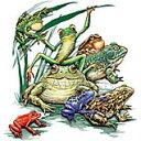 カエル フロッグ 蛙 かえる (01−L) 両生類 トートバッグ エコバッグ マイバッグ【Lサイズ/大】かわいい おしゃれ レディース メンズ 男..