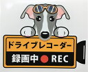 ショッピングドライブレコーダー 犬 イタグレ イタリアングレイハウンド ドライブレコーダー録画中 犬種 外張りステッカー(イタリアングレイハウンド) ドラレコ ステッカー ドッグ いぬ 車 オーナーズグッズ あおり運転 迷惑防止 雑貨 犬プリント
