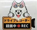 ショッピングドライブレコーダー 犬 サモエド ドライブレコーダー録画中 犬種別 外張りステッカー ドラレコ ステッカー ドッグ 犬プリント いぬ 車 ペット かわいい オーナーズグッズ 迷惑防止 雑貨 犬種別 プレゼント ギフト