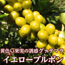 【11月30日までポイント20倍】グァテマラ イエローブルボン200g/スペシャルティコーヒー/高級コーヒー/本格コーヒー ストレート