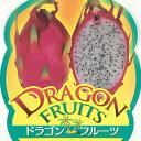 ドラゴンフルーツ ホワイトドラゴン 9cmポット苗