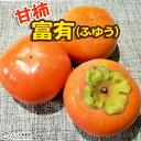 柿 ( 甘柿 )『 富有柿 』ふゆうがき 15cmポット苗木
