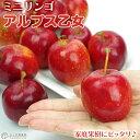 りんご 『 アルプス乙女 』 ( ミニリンゴ ) 接ぎ木ポット苗