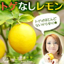 トゲなしレモン 18cmポット接ぎ木苗