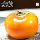 柿 ( 甘柿 ) 『 太秋 ( タイシュウ ) 』 12cmポット接ぎ木苗