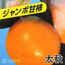 柿 ( 甘柿 ) 『 太秋 ( タイシュウ ) 』 12cmポット苗