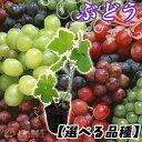 【選べる品種】ぶどう全8品種 9cmポット苗...