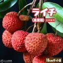 ライチ ( レイシ ) 黒葉種 2年生苗木 18cmポット 【 送料無料 】