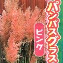 パンパスグラス ピンクフェザー(ピンク花)10.5cmポット苗