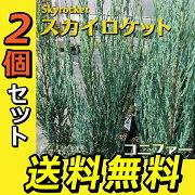 コニファー 『 スカイロケット 』 15cmポット苗 【 送料無料 】 【 2個セット 】