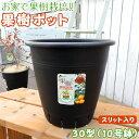 植木鉢 『 果樹ポット 』 10号鉢 ( 30型 黒 スリット入り )
