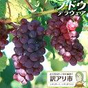 【訳あり・在庫処分】 ブドウ 『 デラウェア 』 5号鉢植え