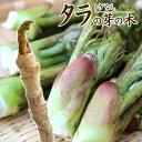 トゲなし 『 タラの芽の木 』 12cm(4号)ポット...