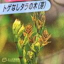 トゲなし「タラの芽の木」