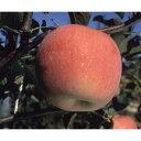 りんご「富士(ふじ)」15cmポット苗